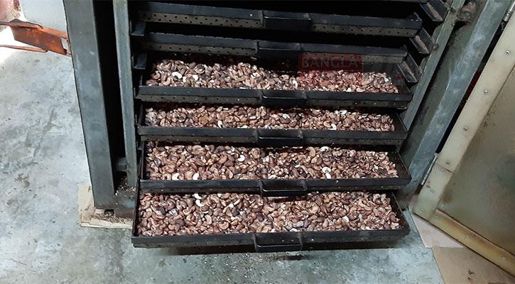 নির্দিষ্ট তাপমাত্রায় কাজু বাদামকে তাপ দেওয়া হচ্ছে